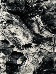Redwood_SmashedSaint